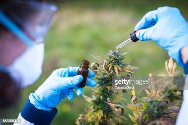 Young Woman Preparing Homeopathic Medicine from Marijuana