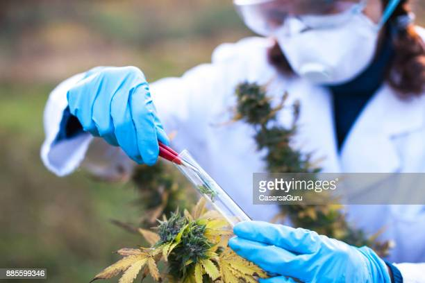 young woman preparing homeopathic medicine from marijuana - medical cannabis stock photos and pictures