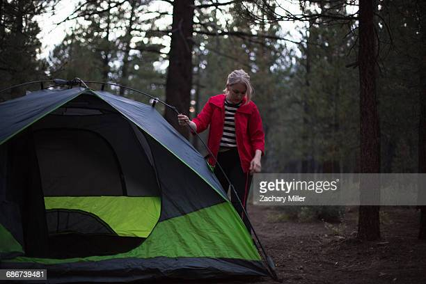 'Young woman preparing tent in forest at dusk, Mammoth Lakes, California, USA'