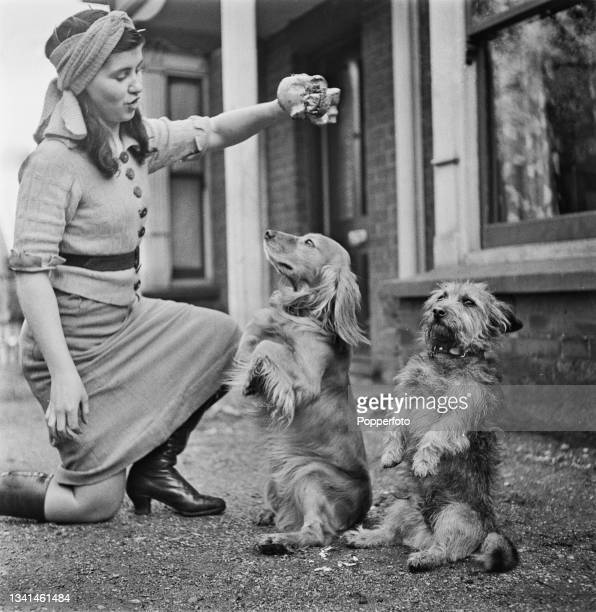 Young woman presents a bone to two dogs sitting up and begging in front of her outside a house in England during World War II on 19th of March 1942....