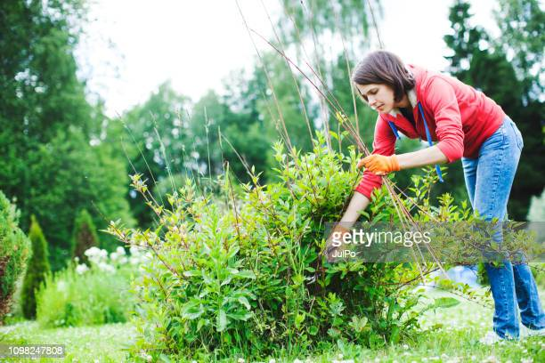 young woman pruning bushes - garden decoration stock pictures, royalty-free photos & images