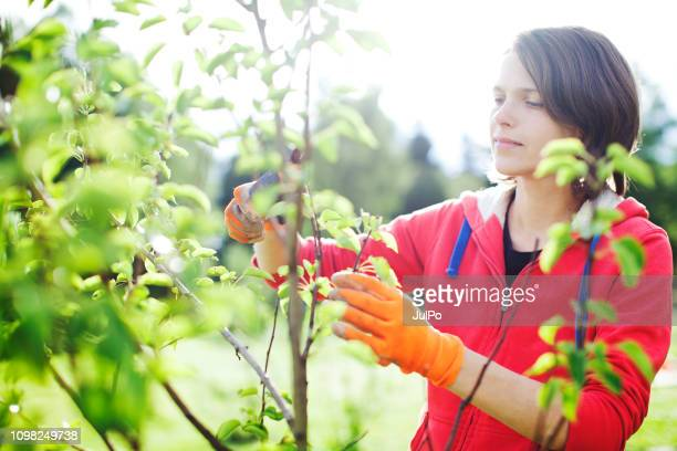 young woman pruning bushes - fruit tree stock pictures, royalty-free photos & images