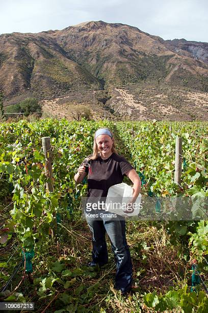 Young woman pruning grapevines
