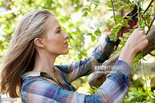 Young woman pruning plants
