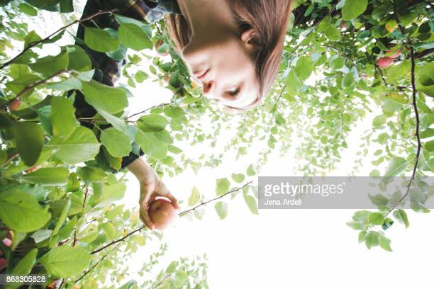 Young Woman Reaching For Apple In Apple Tree