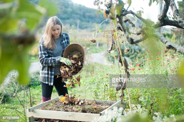 jeune femme recyclage séchées laisse dans le composteur, slovénie, europe - humus photos et images de collection
