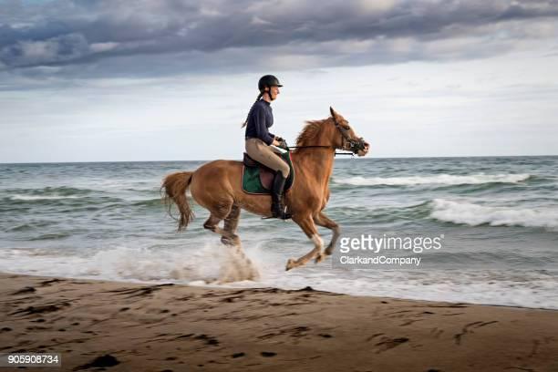 mujer joven montando su caballo árabe a lo largo de la playa. - selandia fotografías e imágenes de stock