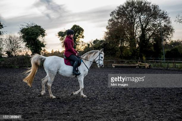 young woman riding on white cob horse in paddock. - herbivorous stock pictures, royalty-free photos & images