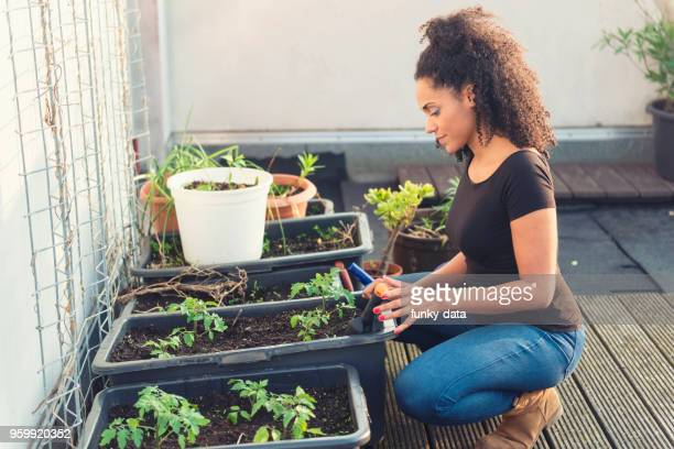 young woman roof gardening - urban garden stock pictures, royalty-free photos & images