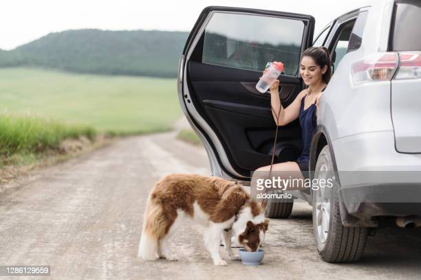 young woman sitting in car and dog drinking water - reusable stock pictures, royalty-free photos & images