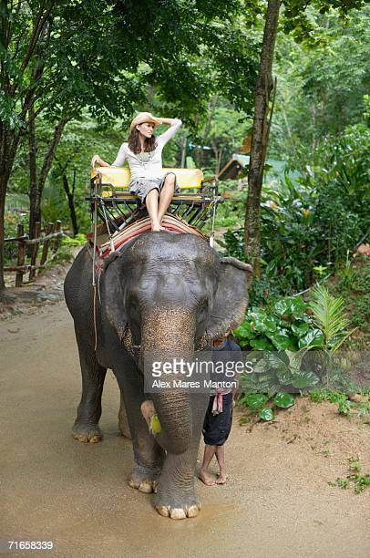 Young woman sitting on top of elephant, hand on head,  Phuket, Thailand