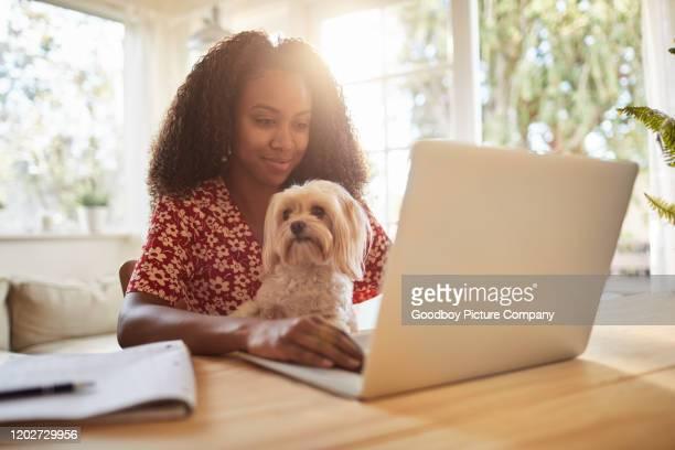 giovane donna seduta con il suo cane e con un laptop - dog pad foto e immagini stock