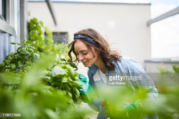 young woman smelling plants outside greenhouse - variable schärfentiefe stock-fotos und bilder