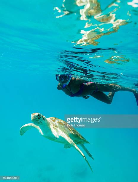 Young woman snorkelling and watching a turtle in the Caribbean Sea near Barbados.