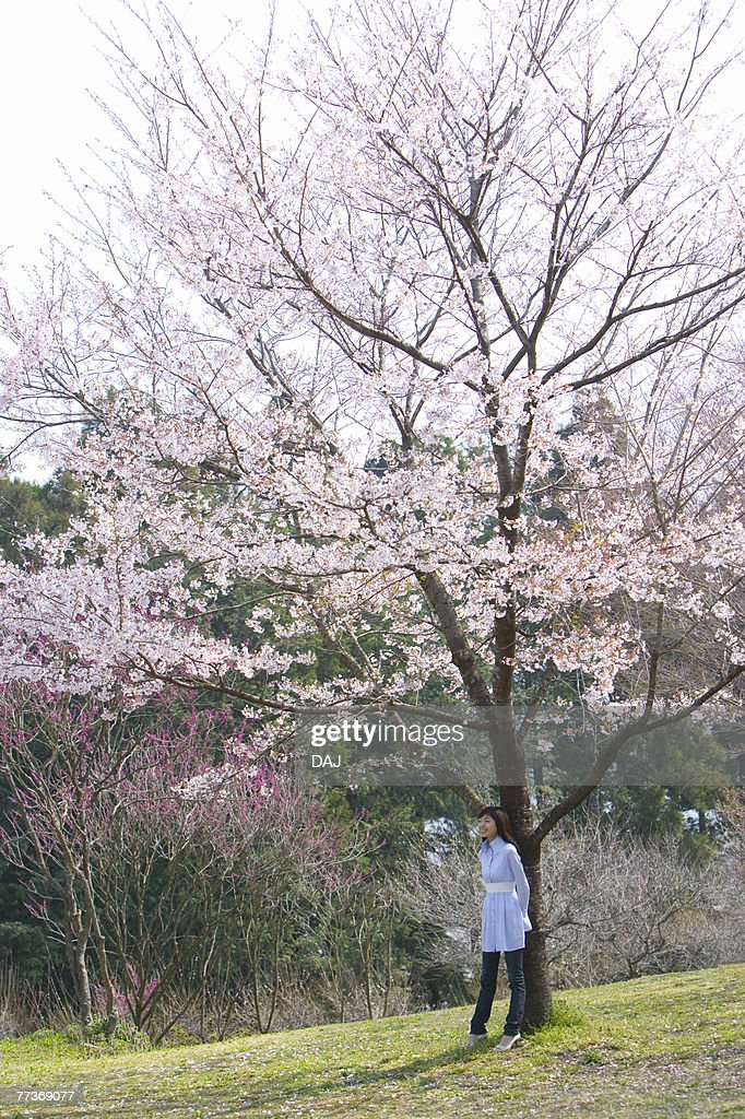 Young Woman Standing Beneath a Cherry Tree, Side View : Photo