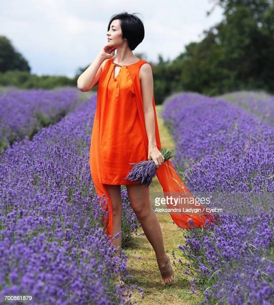 young woman standing in lavender field - orange dress stock pictures, royalty-free photos & images
