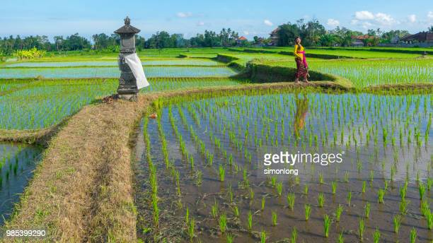 Young Woman Standing On Rice Paddy Against Clear Sky