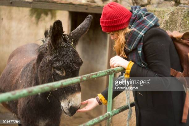 Young woman stroking a donkey