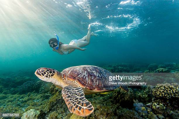 young woman swimming with rare green sea turtle (chelonia mydas), moalboal, cebu, philippines - tortue photos et images de collection