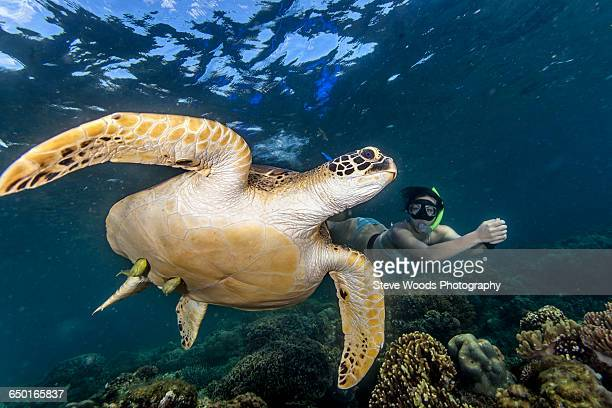 Young woman swimming with rare green sea turtle (Chelonia Mydas), Moalboal, Cebu, Philippines