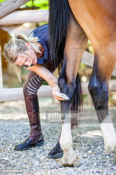 Young Woman Taking Care of Horse´s Leg