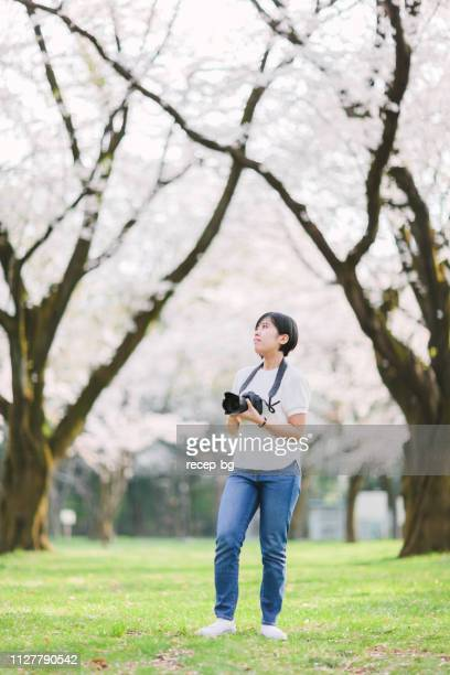 young woman taking photos of cherry tree - hanami stock pictures, royalty-free photos & images