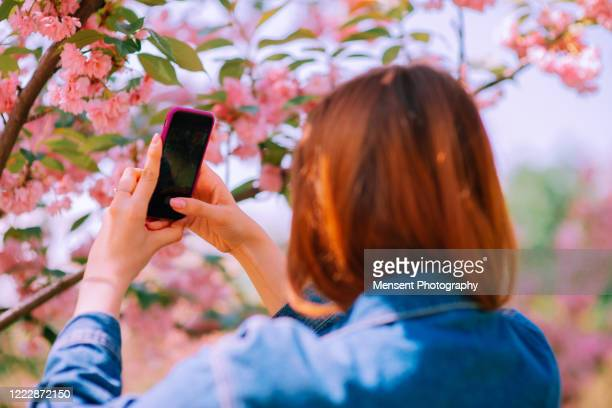 young woman taking pictures of cherry blossoms - audience free event stock pictures, royalty-free photos & images