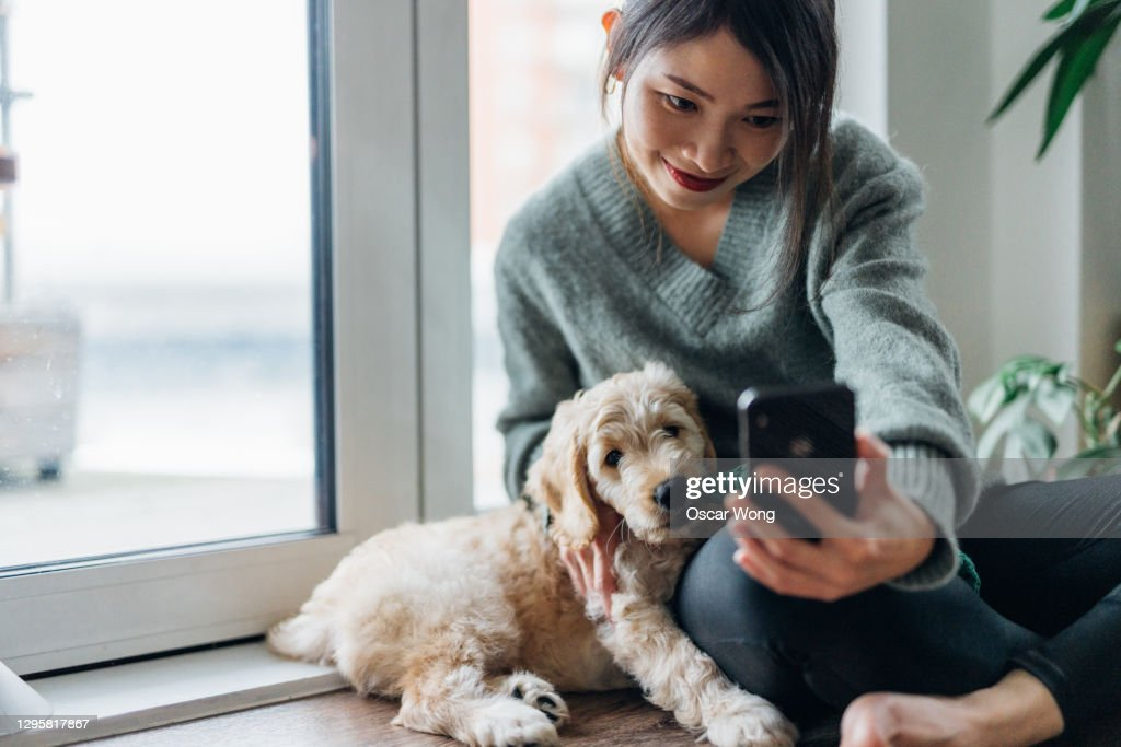 Young Woman Taking Selfie With Smartphone With Her Dog At Home : Stock Photo