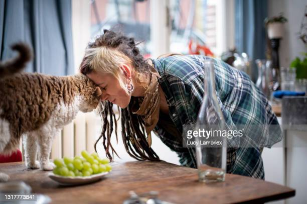 young woman touching cat's head with with her head - north holland stock pictures, royalty-free photos & images