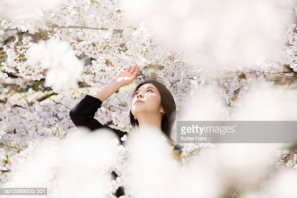 Young woman touching cherry blossoms