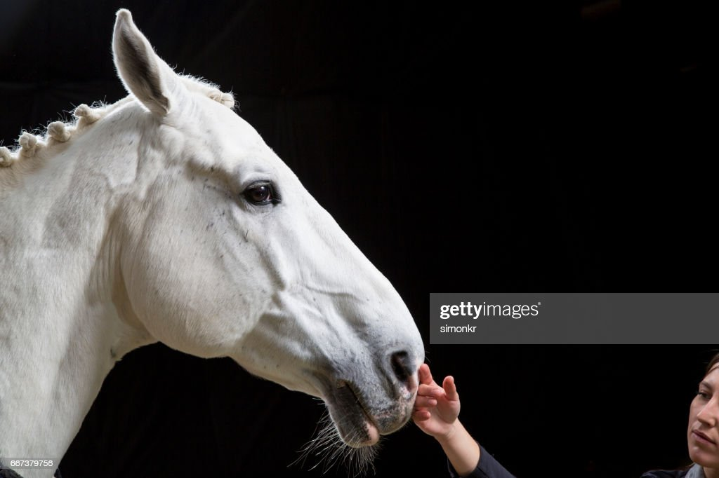 Young woman touching horse : Stock Photo