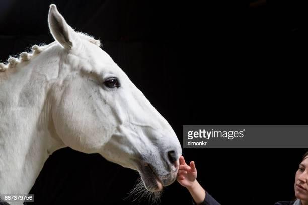 jeune femme toucher le cheval - cheval blanc photos et images de collection