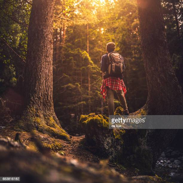 Young woman  trail hiking alone in the forest at sunset