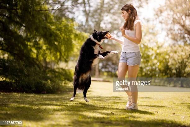 joven entrenando a su perro - border collie fotografías e imágenes de stock