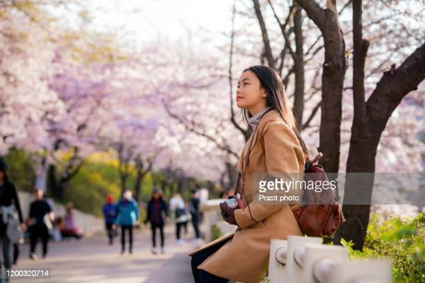 young woman traveler backpacker traveling sightseeing cherry blossom in seokchon lake park during spring season in seoul city, south korea. - korean culture stock pictures, royalty-free photos & images