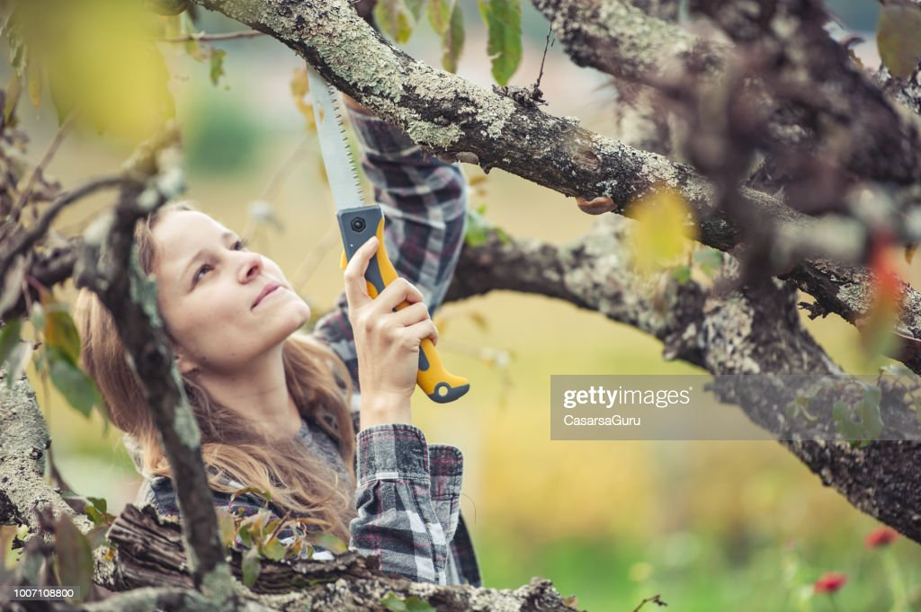 Young Woman Trimming a Fruit Tree : Stock Photo