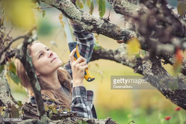 young woman trimming a fruit tree - fruit tree stock pictures, royalty-free photos & images