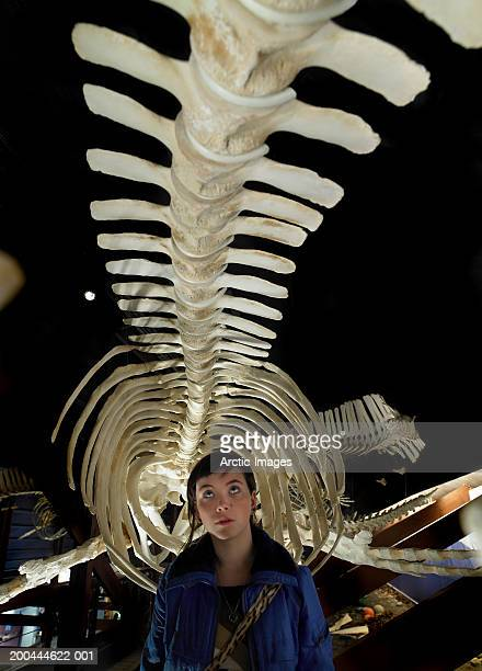 young woman under humpback whale skeleton, close up - husavik stock photos and pictures