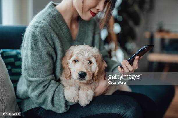 young woman using smartphone while her dog on her lap - dog stock pictures, royalty-free photos & images