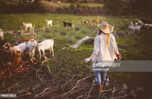 jovem mulher caminhando entre o pastoreio de cabras em um farm - pastor de ovelha - fotografias e filmes do acervo