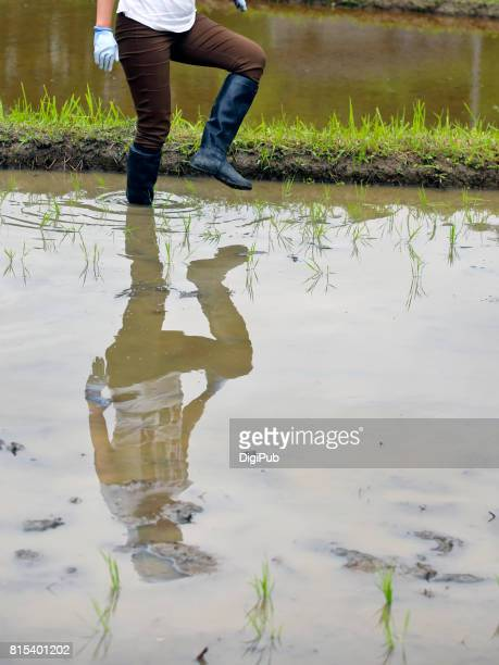 young woman walking in rice paddy - 出来事の発生 ストックフォトと画像
