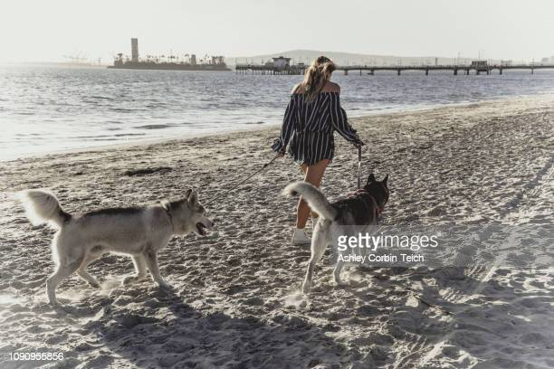 young woman walking pet dogs on beach - playsuit stock pictures, royalty-free photos & images
