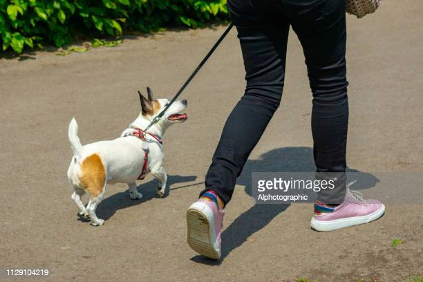 Young woman walking terrier dog