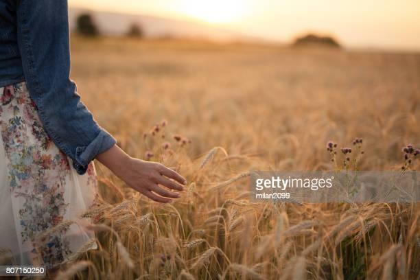 Joven, paseando por el campo de trigo durante susnet