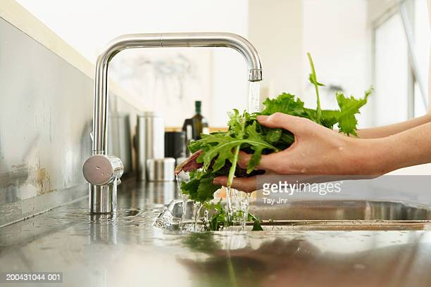 Young woman washing lettuce at kitchen sink, close-up of hands