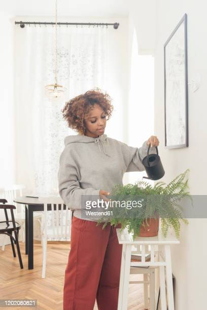 young woman water potted plant at home - watering stock pictures, royalty-free photos & images