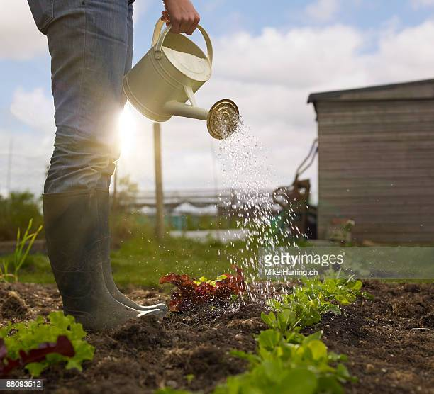 young woman watering allotment - watering stock pictures, royalty-free photos & images