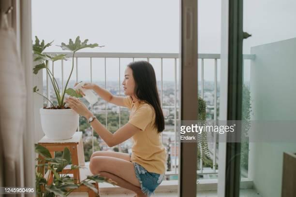 junge frau wässert ihre pflanze in ihrer kleinen wohnung - fensterblatt aroid stock-fotos und bilder