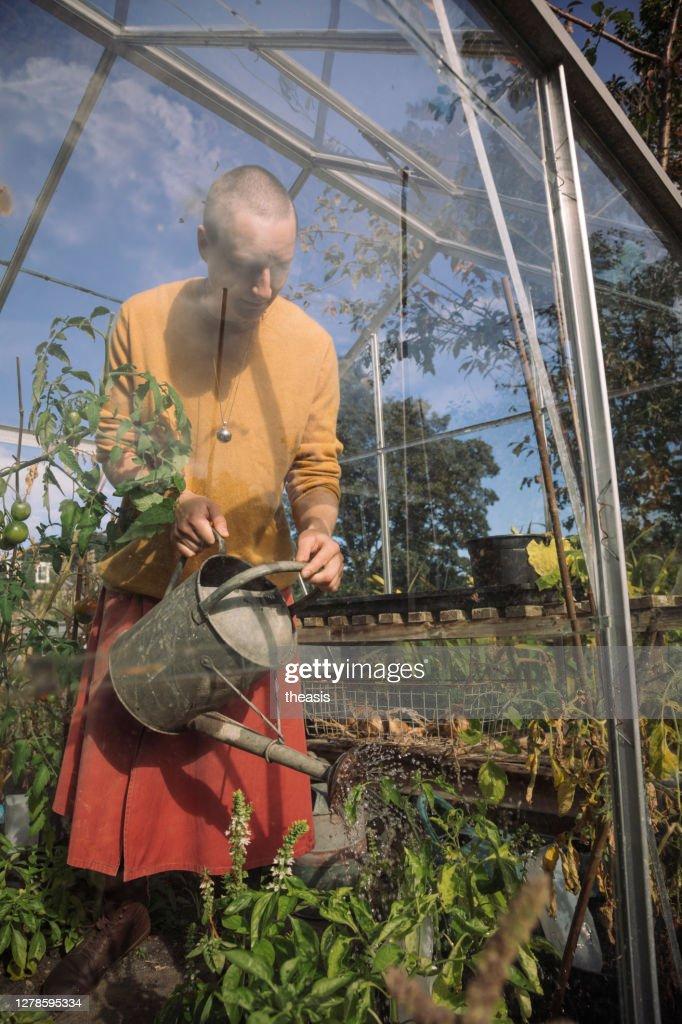 トマトの植物に水をやる若い女性 : ストックフォト