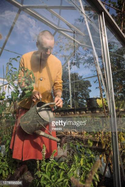 young woman watering tomato plants - theasis stock pictures, royalty-free photos & images
